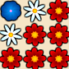 Flowers Time